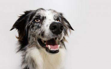 Problemas dentales en perros: síntomas, tratamiento y prevención
