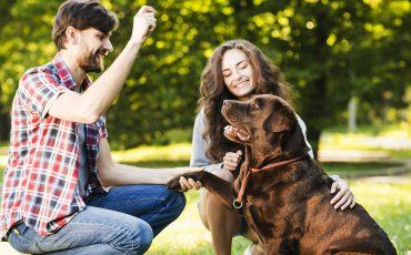 Desmontando mitos extendidos sobre salud animal