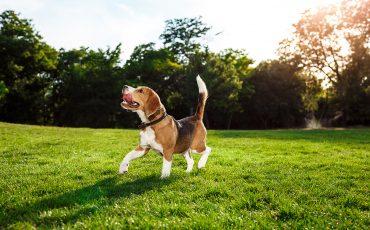 Golpe de calor en perros: síntomas, causas y tratamiento