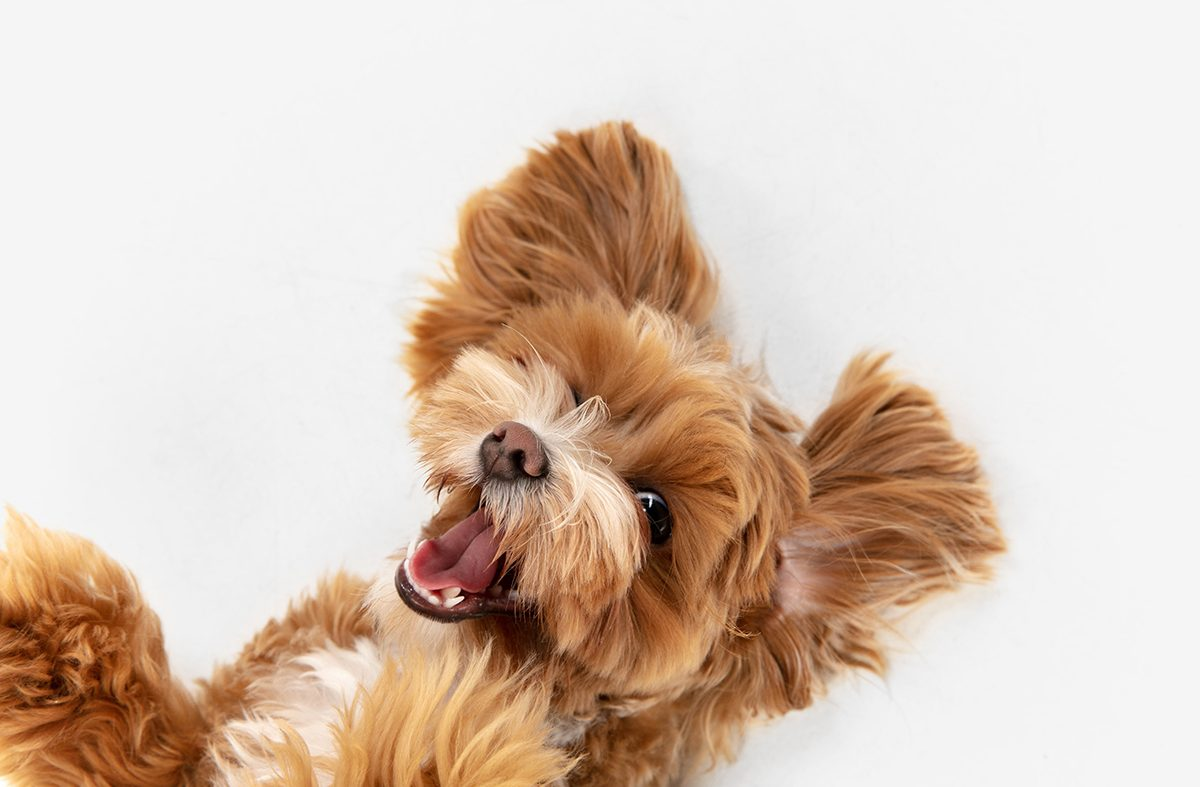 Cómo enseñar a tu cachorro a no morder